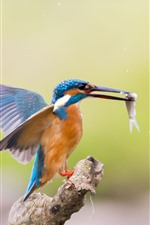 Preview iPhone wallpaper Kingfisher catch a fish, flight, wings