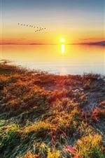 Lake, grass, sunset, birds flight, mountains