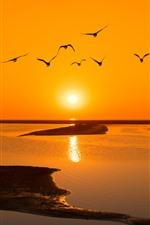 Lake, water, sunset, birds flight