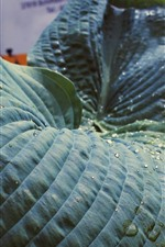 Leaf, water droplets, houseplants