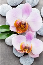 Preview iPhone wallpaper Light pink phalaenopsis, cobblestone