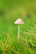 Seta pequeña, hierba, verde