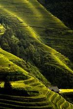 Preview iPhone wallpaper Longji rice terraces, slope, green, Guilin, China