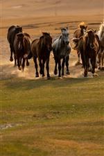 Many horses running