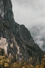 Mountains, fog, trees, autumn, morning