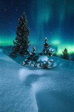 Northern lights, Norway, trees, snow, starry, night
