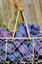 Preview iPhone wallpaper One basket plums