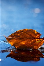 Preview iPhone wallpaper One dry leaf, ice, wet, winter