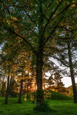 Parque, árvores, raios de sol, verde, manhã