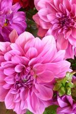 iPhone壁紙のプレビュー ピンクのダリア、花のクローズアップ