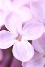 Preview iPhone wallpaper Pink lilac, petals, flowers