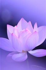 Preview iPhone wallpaper Pink lotus, petals, purple background, hazy, beautiful flower