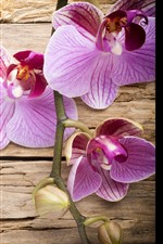 Preview iPhone wallpaper Pink phalaenopsis, wood board