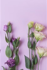 Preview iPhone wallpaper Pink, yellow, purple, eustoma flowers
