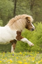 Preview iPhone wallpaper Pony walking, wildflowers
