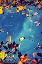 Preview iPhone wallpaper Puddle, water, falls leaves