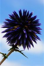 Flor morada, agujas