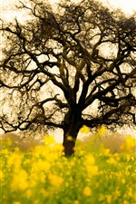 Preview iPhone wallpaper Rapeseed flowers fields, lonely tree