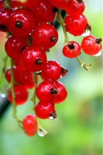 Preview iPhone wallpaper Red currants, berries, water droplets