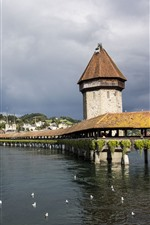 Rio, ponte, pássaros, arquitectura da cidade, Lucerne, Switzerland