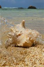Concha do mar, praia, mar, respingos de água