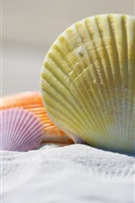Preview iPhone wallpaper Seashells, sands