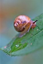 미리보기 iPhone 배경 화면 달팽이, 녹색 잎, 흐릿한