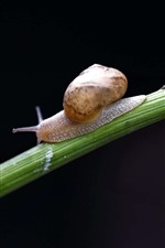 Snail, insect, black background