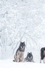 Preview iPhone wallpaper Some wolves, thick snow, trees, winter