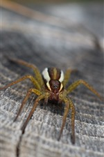 Preview iPhone wallpaper Spider macro photography, stump