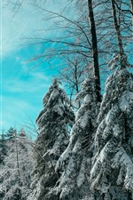 Preview iPhone wallpaper Spruce, trees, snow, winter, blue sky