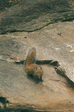 Preview iPhone wallpaper Squirrel, wildlife, rocks