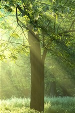 Preview iPhone wallpaper Summer, trees, grass, green, sun rays, fog