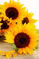 Preview iPhone wallpaper Sunflowers, basket, white background