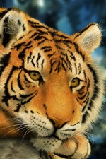 Preview iPhone wallpaper Tiger rest, art picture