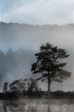 Preview iPhone wallpaper Trees, fog, river, dawn