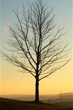 Trees, fog, sunrise, sunlight, morning