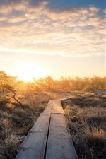 Preview iPhone wallpaper Trees, grass, wood path, sunrise, morning