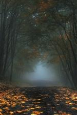 Árboles, hojas, camino, canal, niebla, mañana, otoño