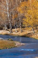 Árvores, rio, outono, natureza