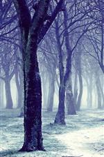 Árvores, neve, névoa, inverno, manhã
