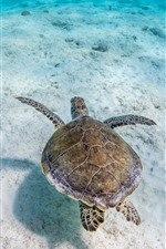 Preview iPhone wallpaper Turtle, underwater, sea, clear water