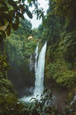 Waterfall, trees, green
