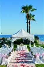 Decoração de casamento, cadeiras, pétalas de rosa, palmeiras