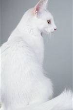 Preview iPhone wallpaper White cat back view, furry, tail