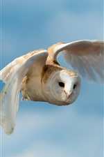 Preview iPhone wallpaper White owl flight, wings, sky