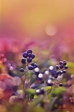 Preview iPhone wallpaper Wild berries, hazy
