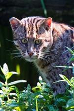 Gato salvaje mirar hacia atrás, plantas, verde