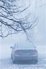 Winter, morning, snow, trees, cars, dog, fog