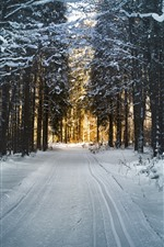 Preview iPhone wallpaper Winter, trees, path, snow, sunshine